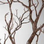 Manzanita branches (tan/brown) - Ask about price