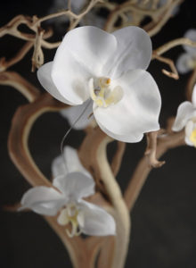 Orchids (for decorative branches) - Ask about price