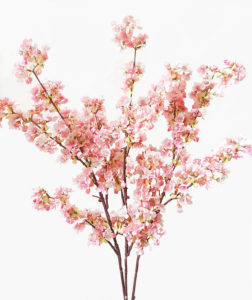 Cherry Blosson Branch - Ask about price